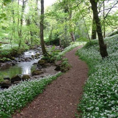 Photo of Fairy Glen Maeshafn with river banks covered in wild garlic - Click to open full size image
