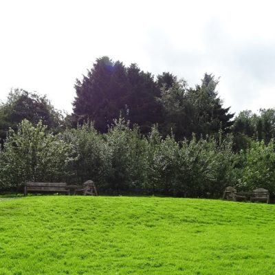 Photo of native fruit trees Maes Ysgawen Park